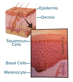 image1_skincells
