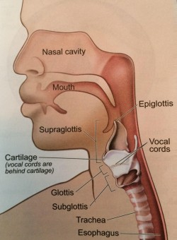 image3_nosethroat